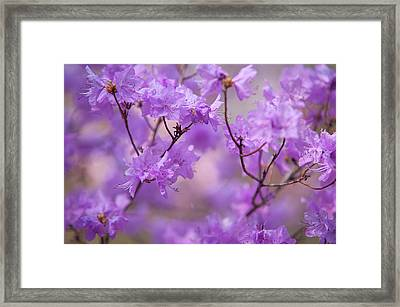Framed Print featuring the photograph Purple Delight. Spring Watercolors by Jenny Rainbow