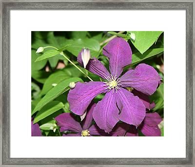 Purple Delite Framed Print