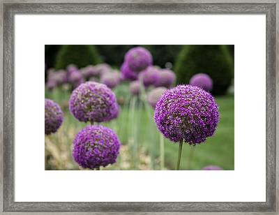 Framed Print featuring the photograph Purple Depth by Jason Moynihan