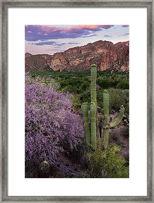 Purple Desert Beauty Framed Print
