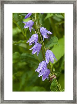 Purple Dew Drops Framed Print
