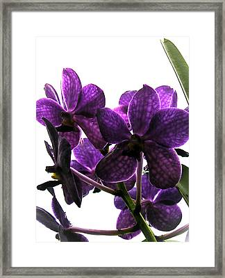 Purple Framed Print by Dora Miller