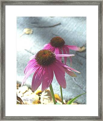 Purple Echinacea Framed Print