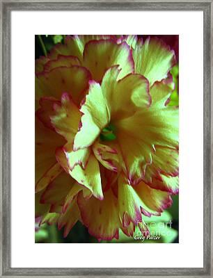 Purple Edges Framed Print by Greg Patzer