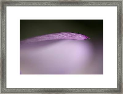 Purple Fall Framed Print