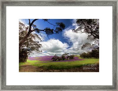 Framed Print featuring the photograph Purple Fields by Douglas Barnard