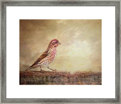 Purple Finch Walks The Line Framed Print
