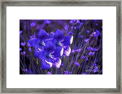 Purple Florwer Abstract Framed Print