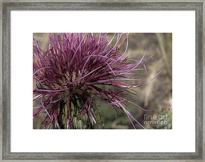 Purple Flower 2 Framed Print
