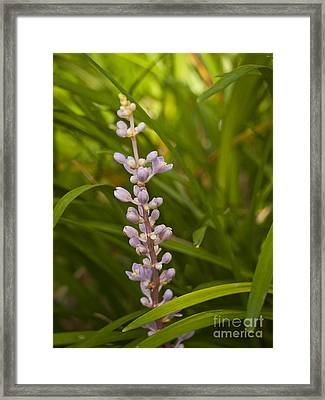 Purple Flower 2 Framed Print