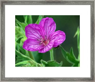 Purple Flower 2 Framed Print by Marty Koch