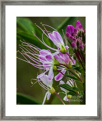 Purple Flower 6 Framed Print