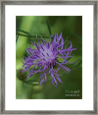 Purple Flower 8 Framed Print