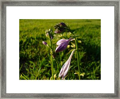 Purple Flower Framed Print by Ali Dover