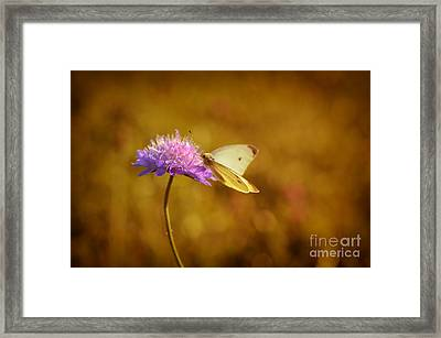 Purple Flower And Butterfly Framed Print by Sabine Jacobs