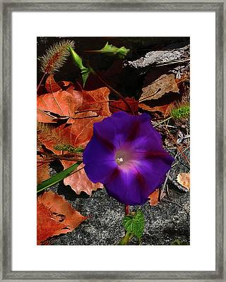 Framed Print featuring the photograph Purple Flower Autumn Leaves by Roger Bester