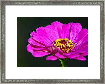 Purple Flower Close Up Framed Print by Edward Myers