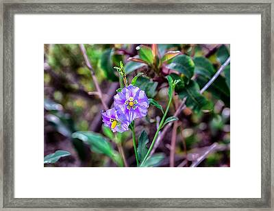 Purple Flower Family Framed Print