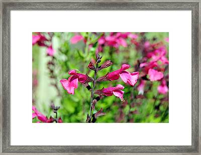 Purple Flower Framed Print by Isam Awad