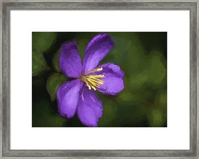 Framed Print featuring the photograph Purple Flower Macro Impression by Dan McManus