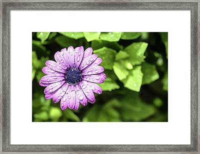 Purple Flower On Green Framed Print