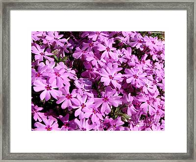 Purple Flower Power Framed Print by Gardening Perfection