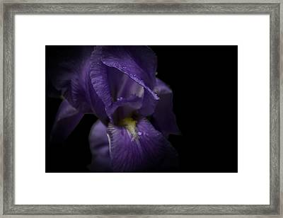 Framed Print featuring the photograph Purple Flower by Ryan Photography