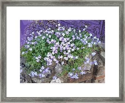 Purple Flower Textured Photo 1028b Framed Print