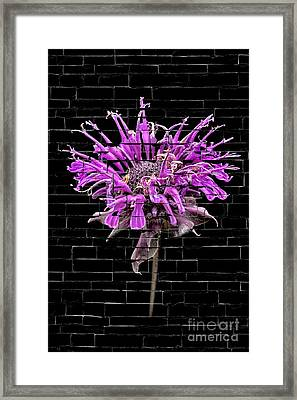 Framed Print featuring the photograph Purple Flower Under Bricks by Walt Foegelle