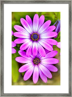 Purple Flowers Framed Print by Az Jackson