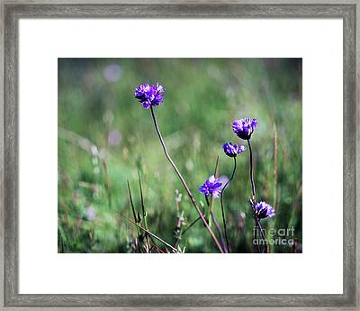 Framed Print featuring the photograph Purple Flowers by Jim and Emily Bush