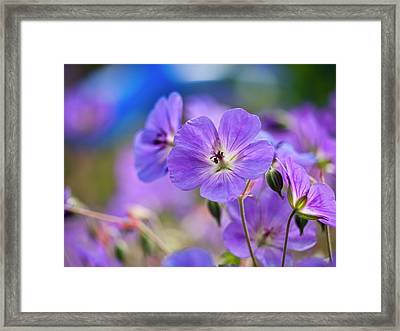 Purple Flowers Framed Print by Rae Tucker