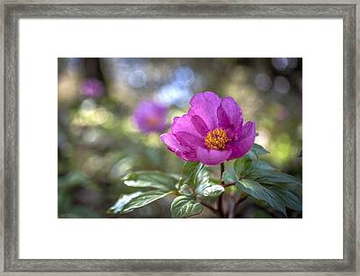 Purple Forest Wild Flower  Framed Print