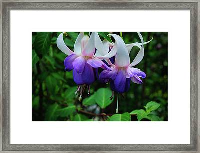 Framed Print featuring the photograph Purple Fuschia by Tikvah's Hope