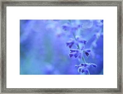 Framed Print featuring the photograph Purple Garden by Douglas MooreZart