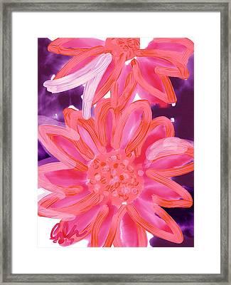 Purple Gerbers Framed Print