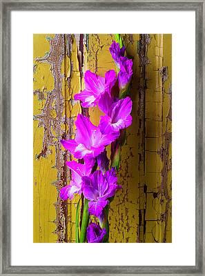 Purple Glad Framed Print by Garry Gay