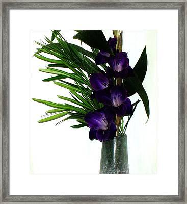 Purple Gladiola Framed Print by Marsha Heiken