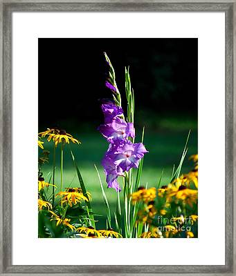Framed Print featuring the photograph Purple Glads And Black-eyed Susans by Lila Fisher-Wenzel