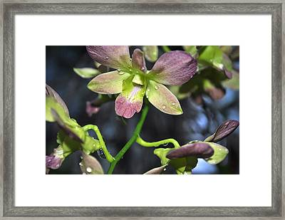 Purple Glory Framed Print by Elizabeth Del Rosario-Baker