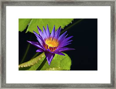 Framed Print featuring the photograph Purple Gold by Steve Stuller