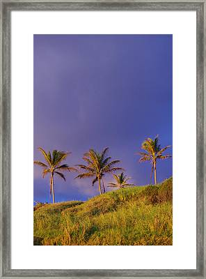 Purple Hana Framed Print by Tracey  Kennedy-Taylor