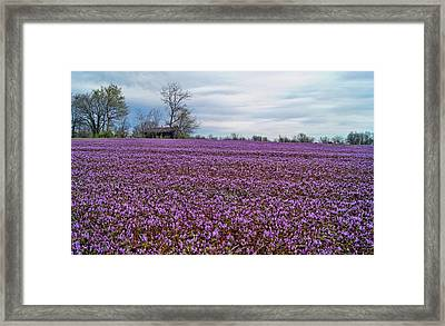 Framed Print featuring the photograph Purple Haze by Cricket Hackmann