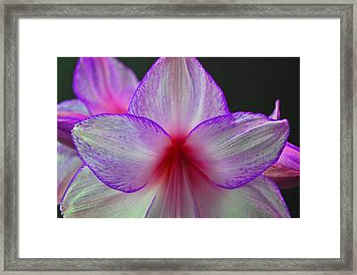 Purple Haze Framed Print by Donna Shahan