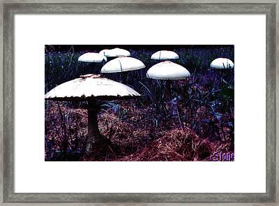 Purple Haze Framed Print by September  Stone