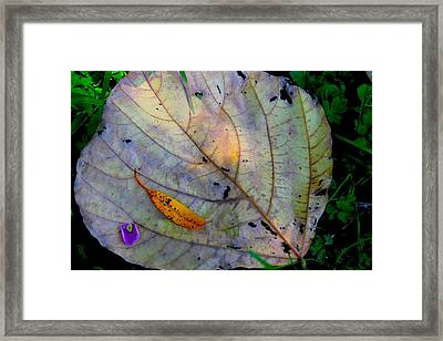 Purple Haze Framed Print by Katlyn Frye