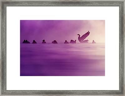Purple Haze Framed Print by Roeselien Raimond