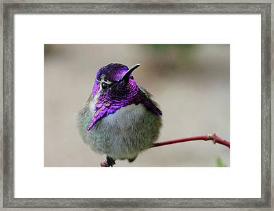 Purple Head Framed Print