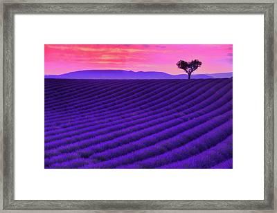 Purple Heart Framed Print by Midori Chan