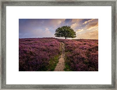 Purple Hill Framed Print